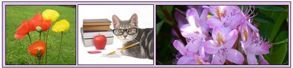 banner - cat flowers